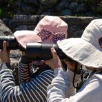Die Schwestern Nikon und Canon