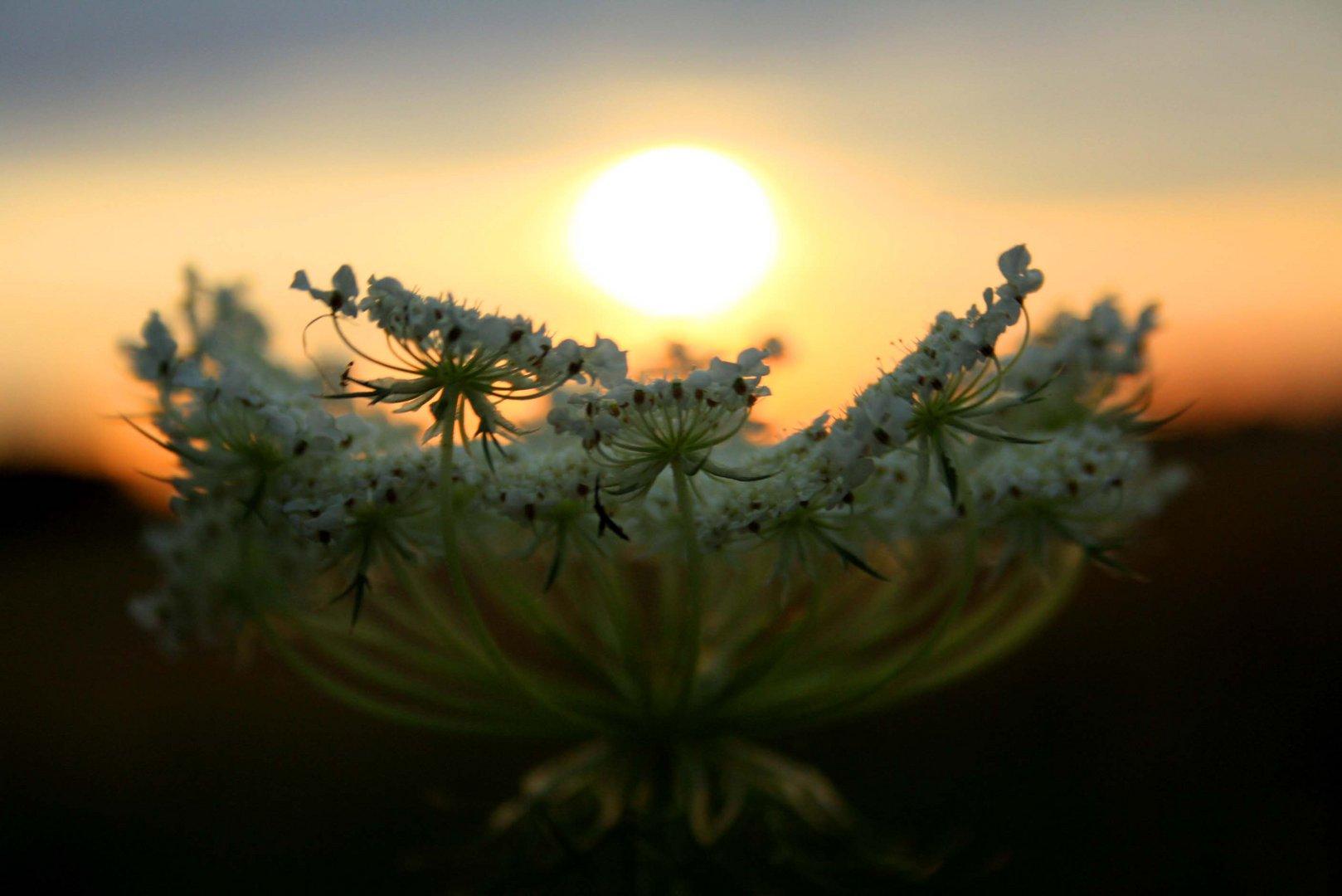 Die Seele der Pflanze