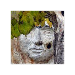 Die Seele des Baumes hat ein Gesicht