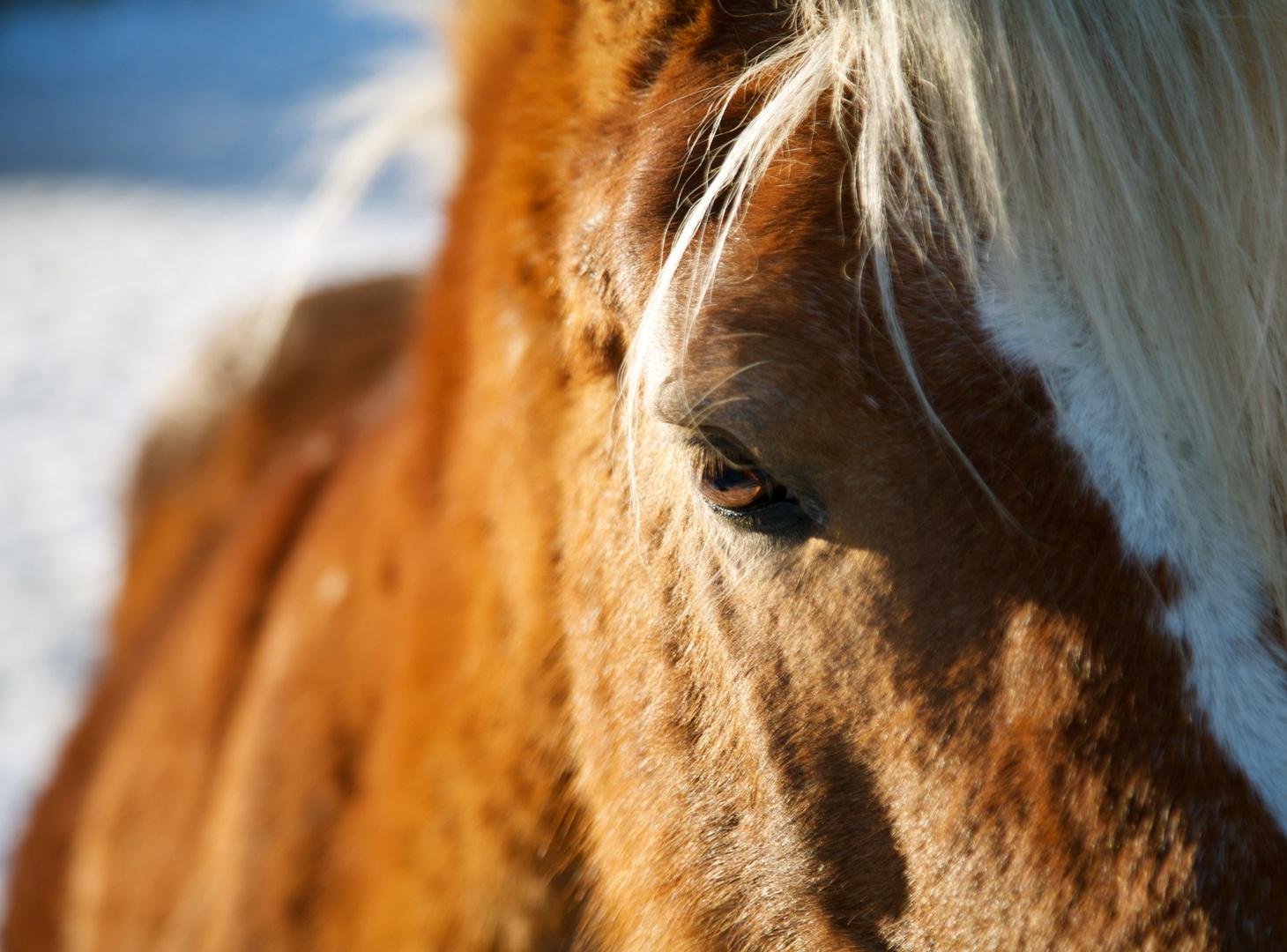 Die Seele des Pferdes äußert sich nur denjenigen, die sie suchen.