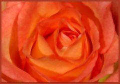 Die Seele meiner Rose