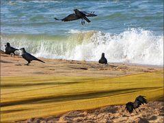 Die Seevögel