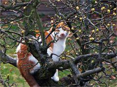 Die seltene Birnbaumwildkatze