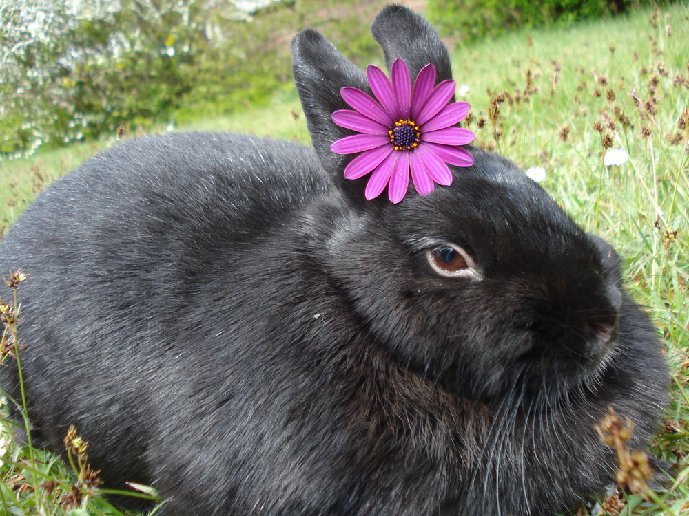 Hase sexy Marica Hase