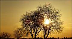 Die Skelette der Laubbäume kommen bei starkem Gegenlicht erst richtig zur Geltung