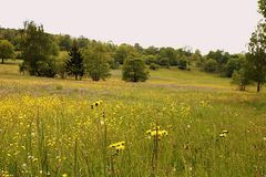 Die Sommerblumenwiese
