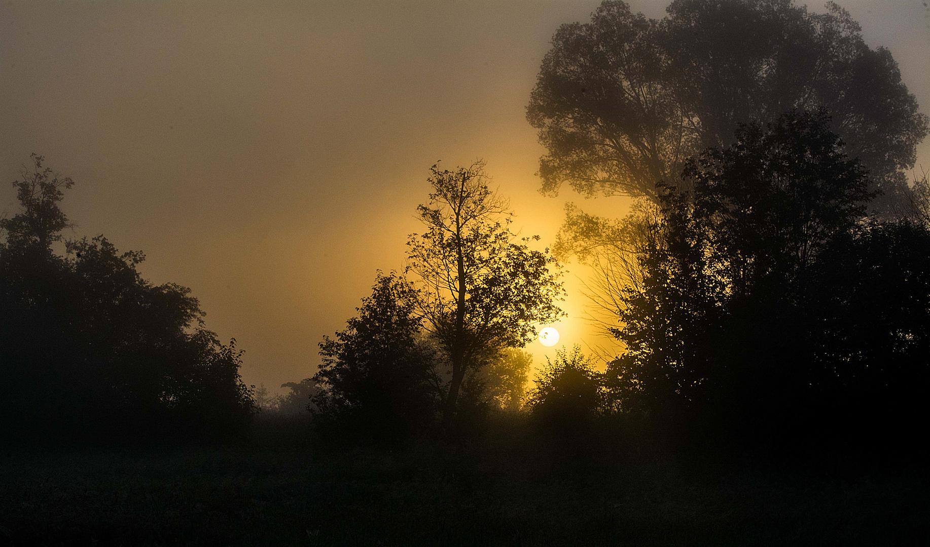 Die Sommersonne brennt sich durch den Nebel