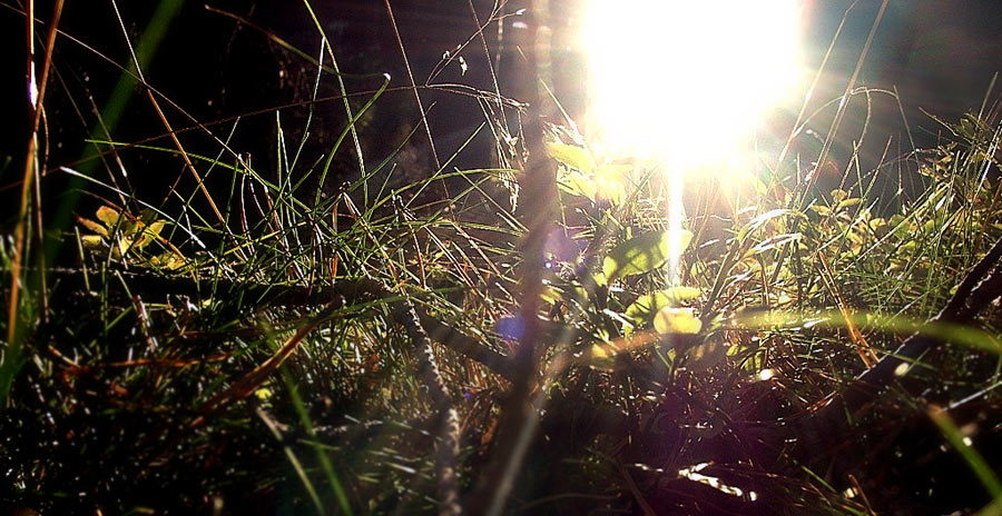 .. die sonne .. das licht ..