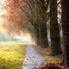 Die Sonne im Herbst