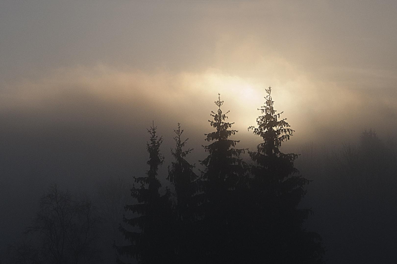 Die Sonne kämpft sich durch den Nebel..