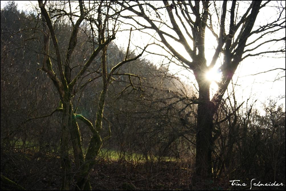 Die Sonne kehrt zurück (: