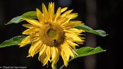 Die Sonne lacht - u. die Insekten freuen sich!