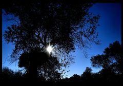 ..die Sonne scheint bei Tag und Nacht...
