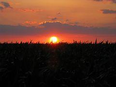 Die Sonne versinkt im Gras...? #2