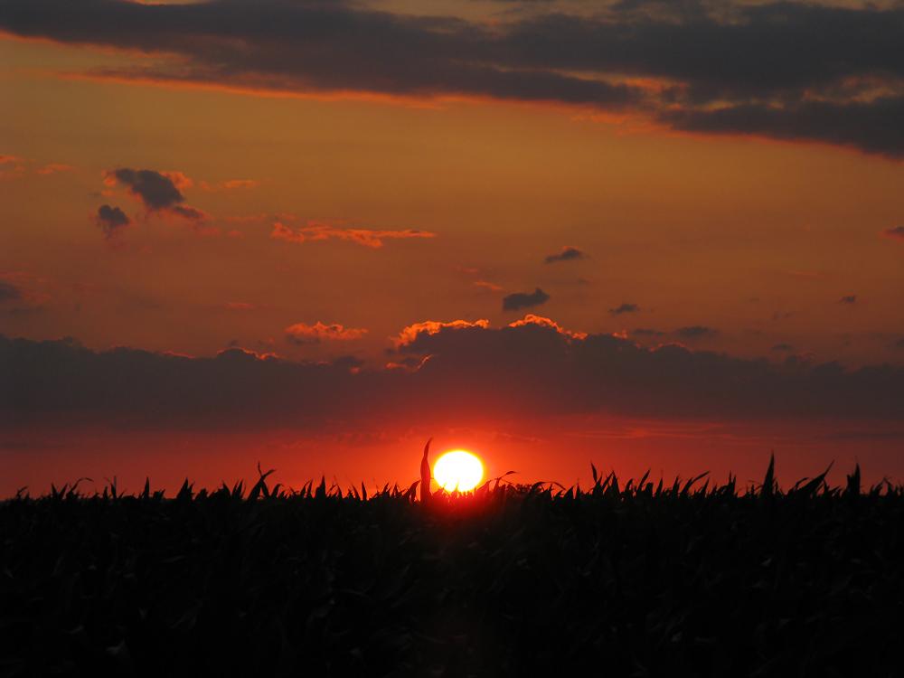 Die Sonne versinkt im Gras...? #3