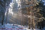 Die Sonne weckt den Wald