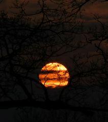Die späte Sonne