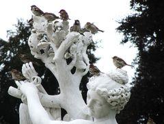 Die Spatzen von Sanssouci