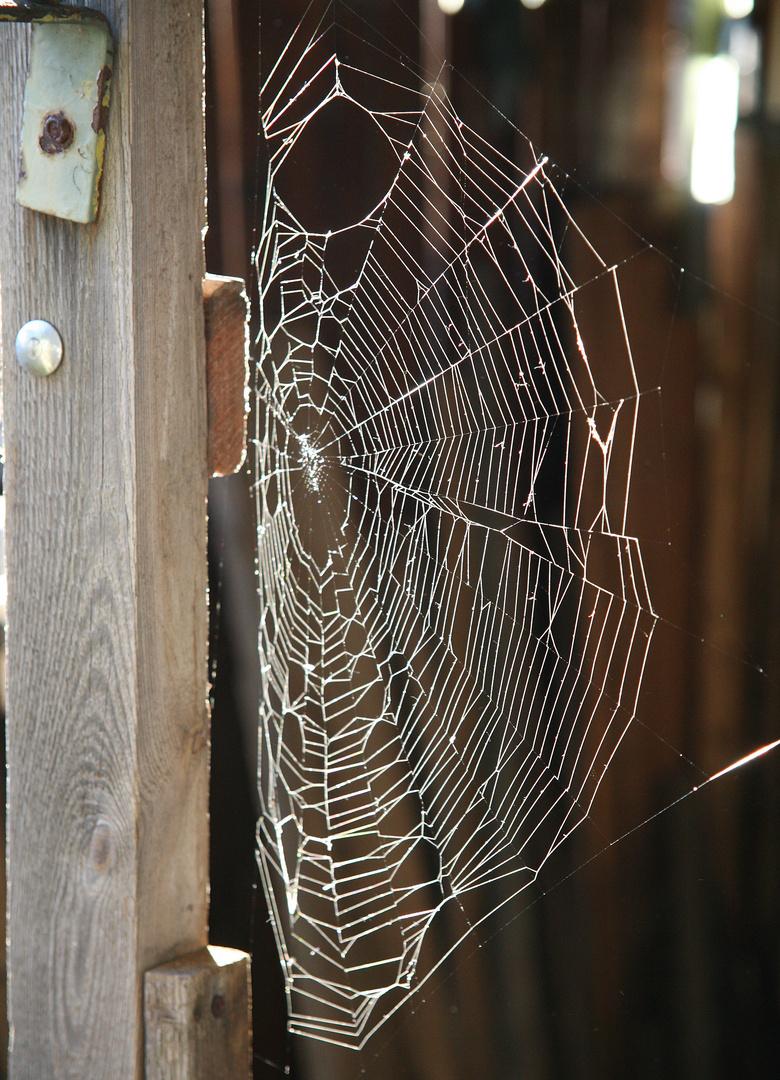 Die Spinne fehlt
