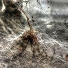 Die Spinne Thekla....