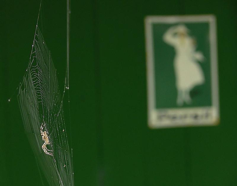 Die Spinne und welches Werbeschild?