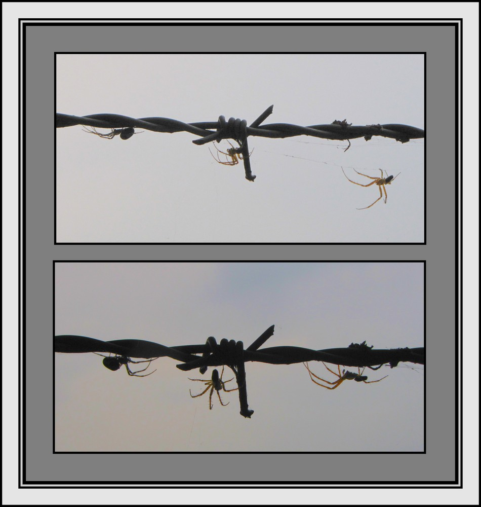 ...die spinnen, die drei...