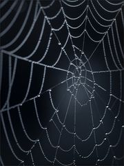 Die Spinnen spinnen