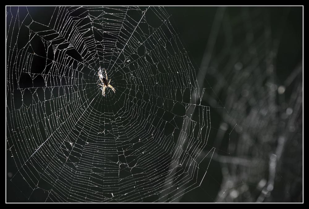 Die spinnen wohl...(I)