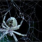die spinnt doch die Spinne