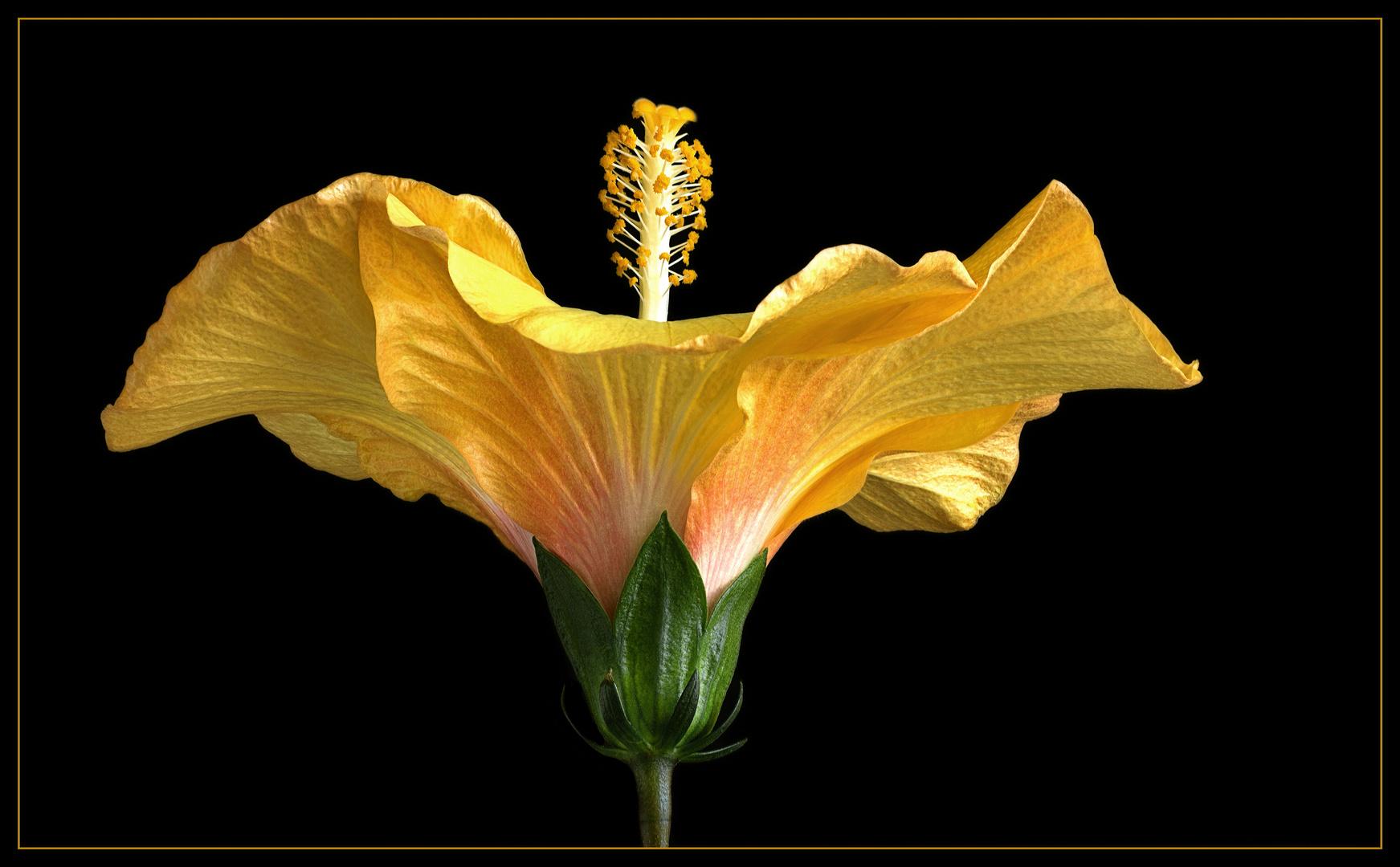 Die Sprache der Blumen wird überall verstanden Foto & Bild ...