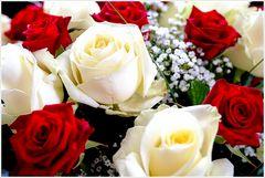 Die Sprache der Rosen