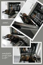 Die Spülmaschinen Katze