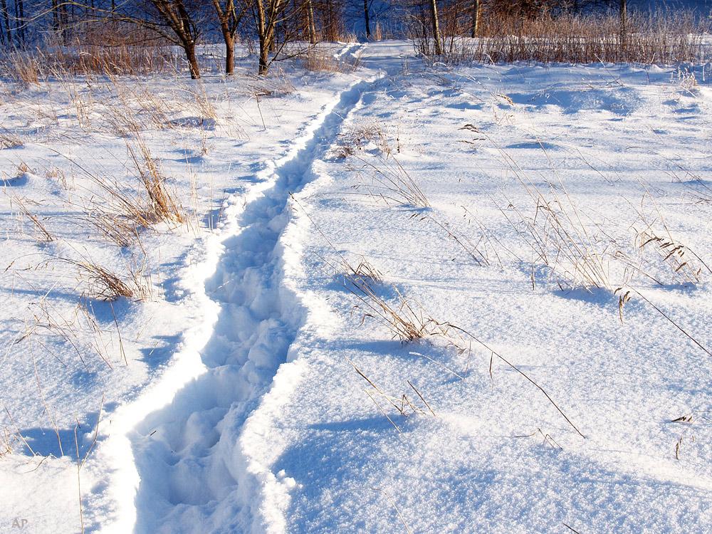 Die Spur im Schnee
