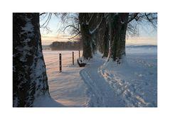 Die Steindl-Allee im Winter