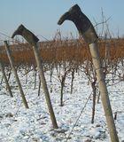 Die Stiefel des Winzers im Weinberg