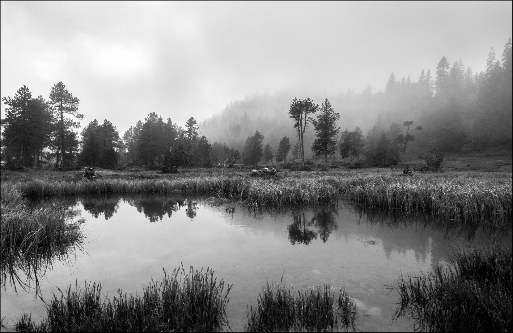 Die Stille am Teich