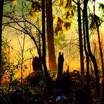 Die stille des Waldes