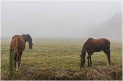die stört der Nebel nicht