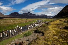 Die Straßen der Pinguine...
