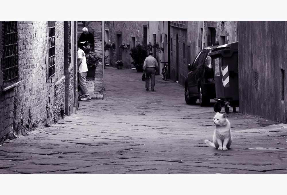 Die Straßen von Populonia (Toskana)