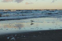 Die stürmische Ostsee
