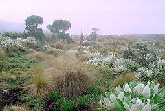 Die Sümpfe am Mount Kenya