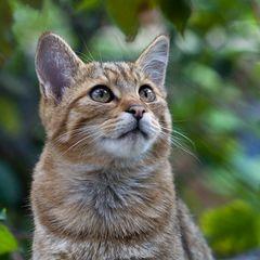DIE SÜSSESTEN FRÜCHTE ... (European Wildcat 14)