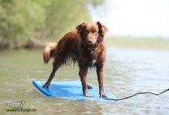 Die Surfqueen vom Bodensee