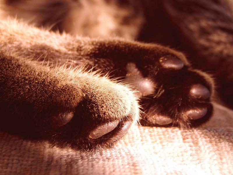 Die Tatze der Katze :-)