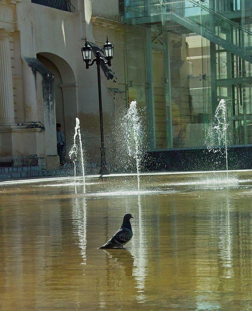Die Taube...