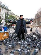 Die Tauben von Krakow !