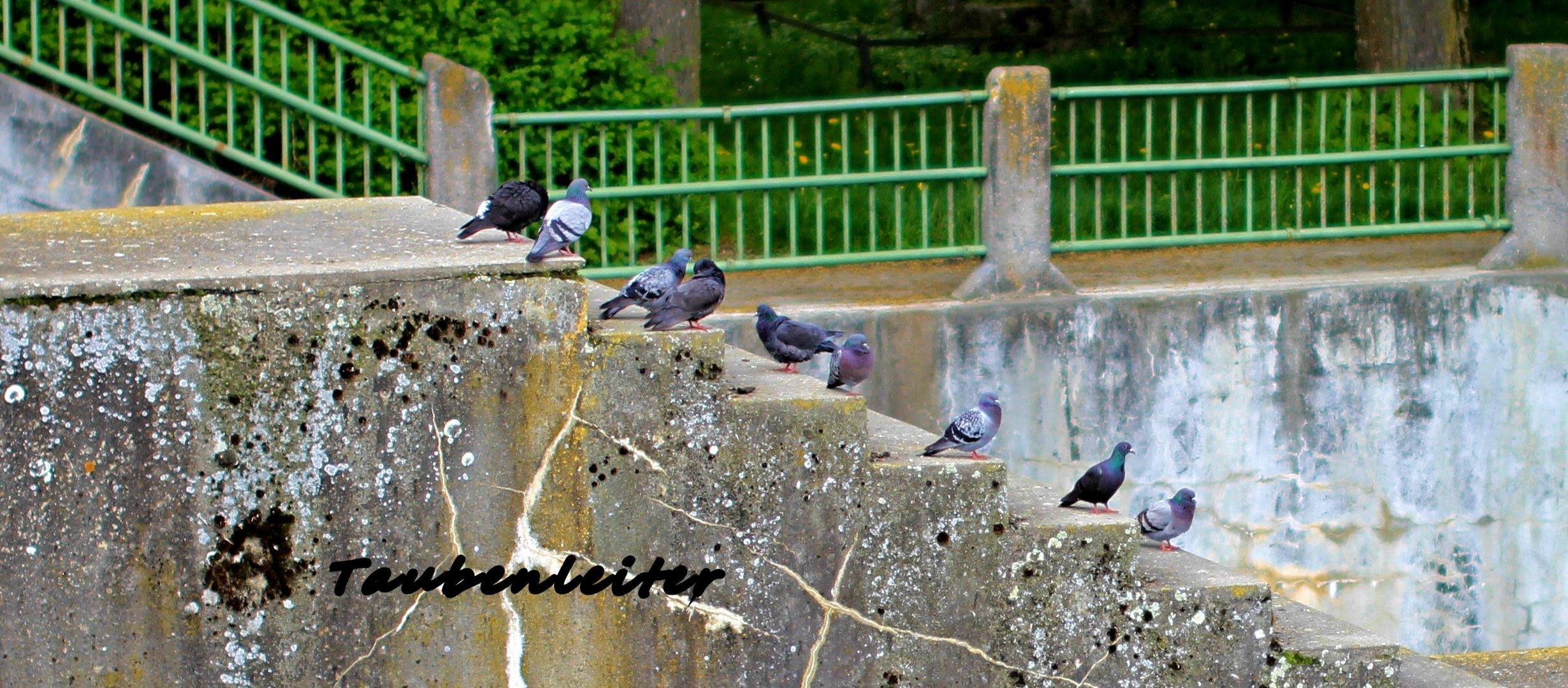 die Taubenleiter am Hochbalass