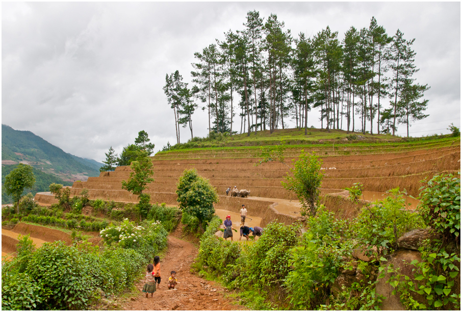 Die Terrassenfelder auf dem Bergland MCC Vietnam
