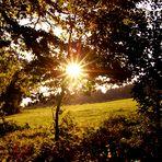 Die tiefstehende Sonne, scheint in den Herbstwald!